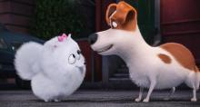 "In this image released by Universal Pictures, Gidget, voiced by Jenny Slate, left, and Max, voiced by Louis C.K., appear in a scene from, ""The Secret Lives of Pets."" (Illumination Entertainment and Universal Pictures via AP)"