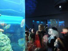 carnevale-acquario-di-genova-media